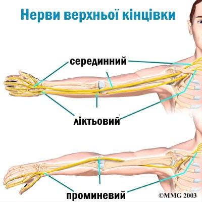 Масаж нервових стовбурів верхньої кінцівки.